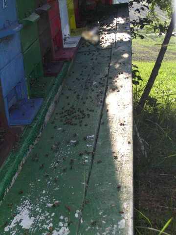 Naletna deska polna mrtvih čebel